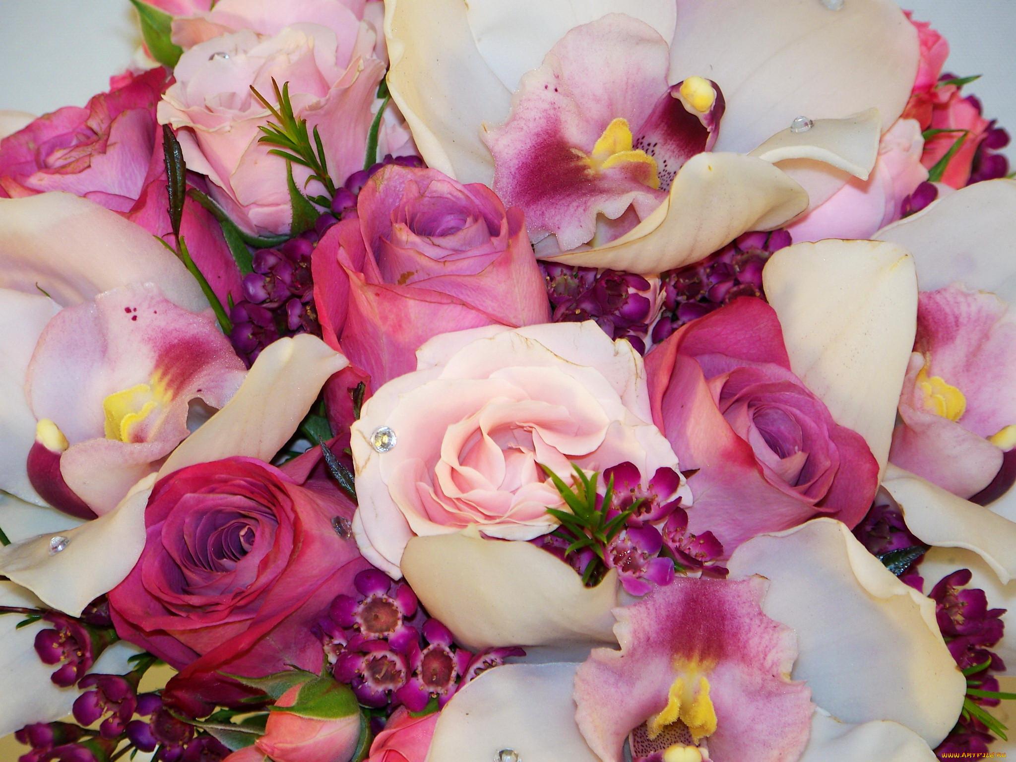 красивые картинки орхидей и роз первая линия моря